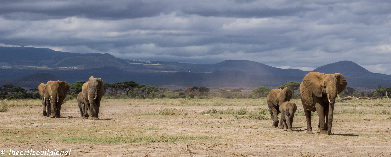 Amboseli NP 2