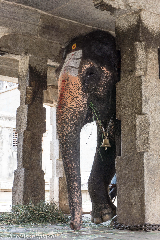 Hampi Temple Elefant