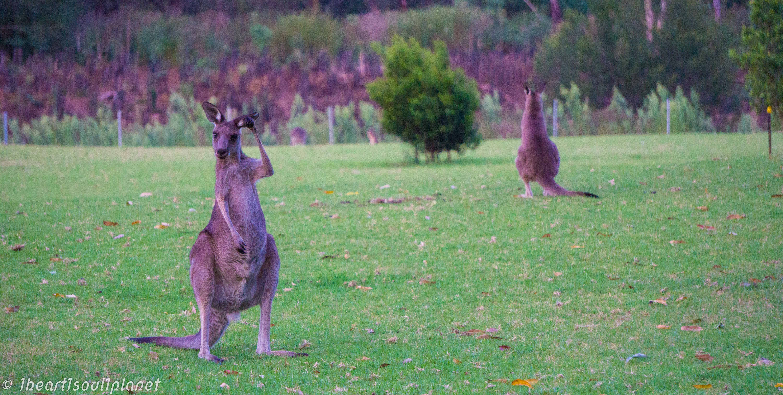 kangaroo valley-2