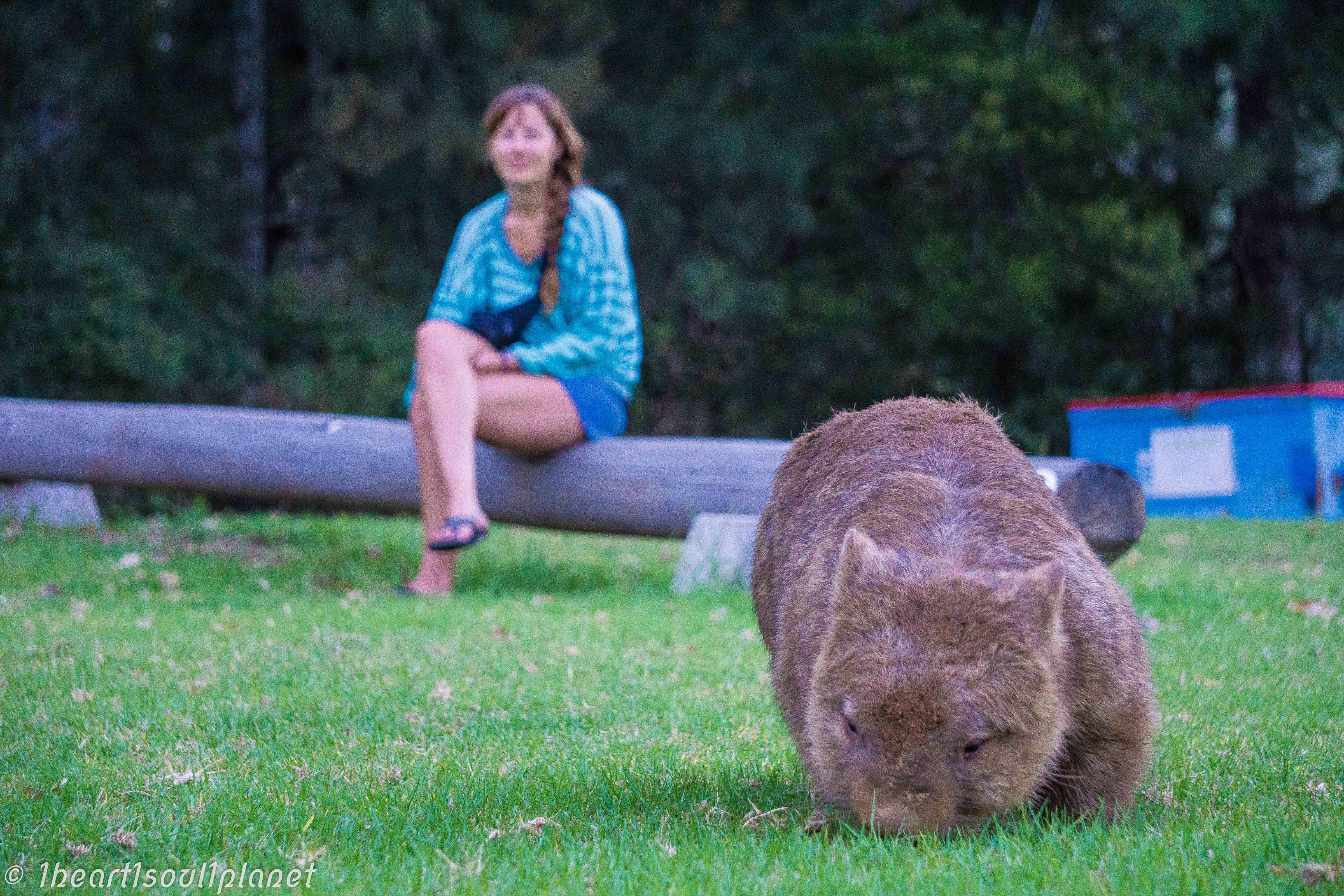 kangaroo valley-3